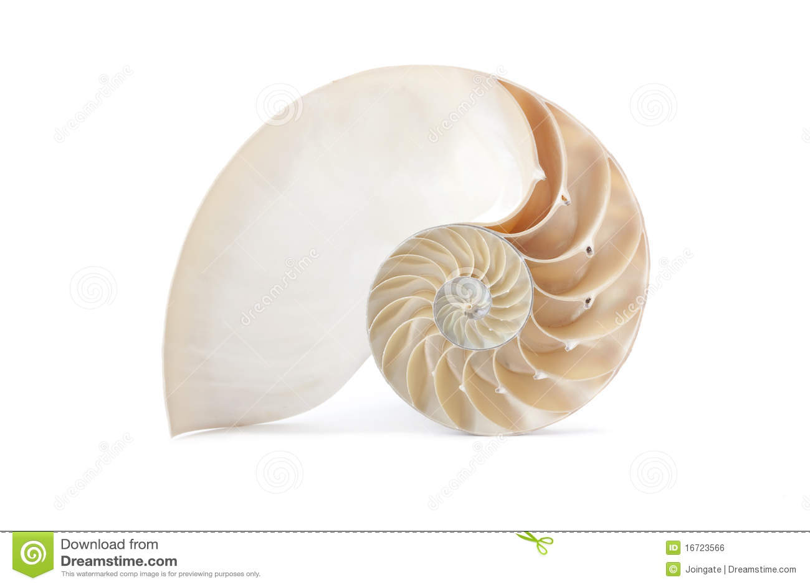 Coperture del Nautilus e reticolo geometrico famoso