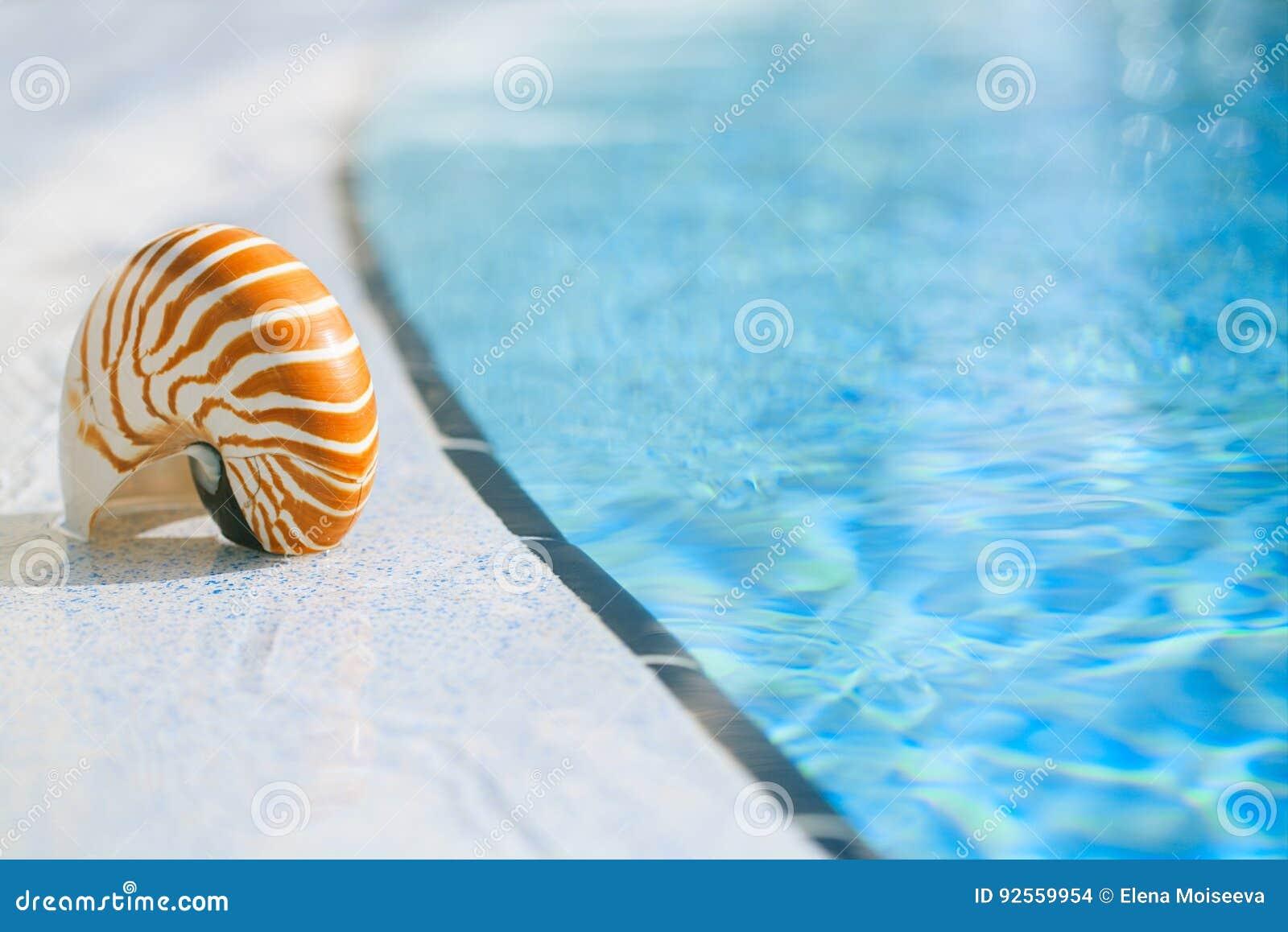 Coperture di nautilus al bordo della piscina della località di soggiorno