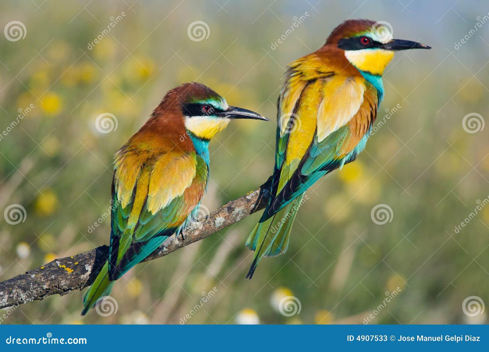 Foto delle coppie degli uccelli metta a fuoco in aereo di frist del