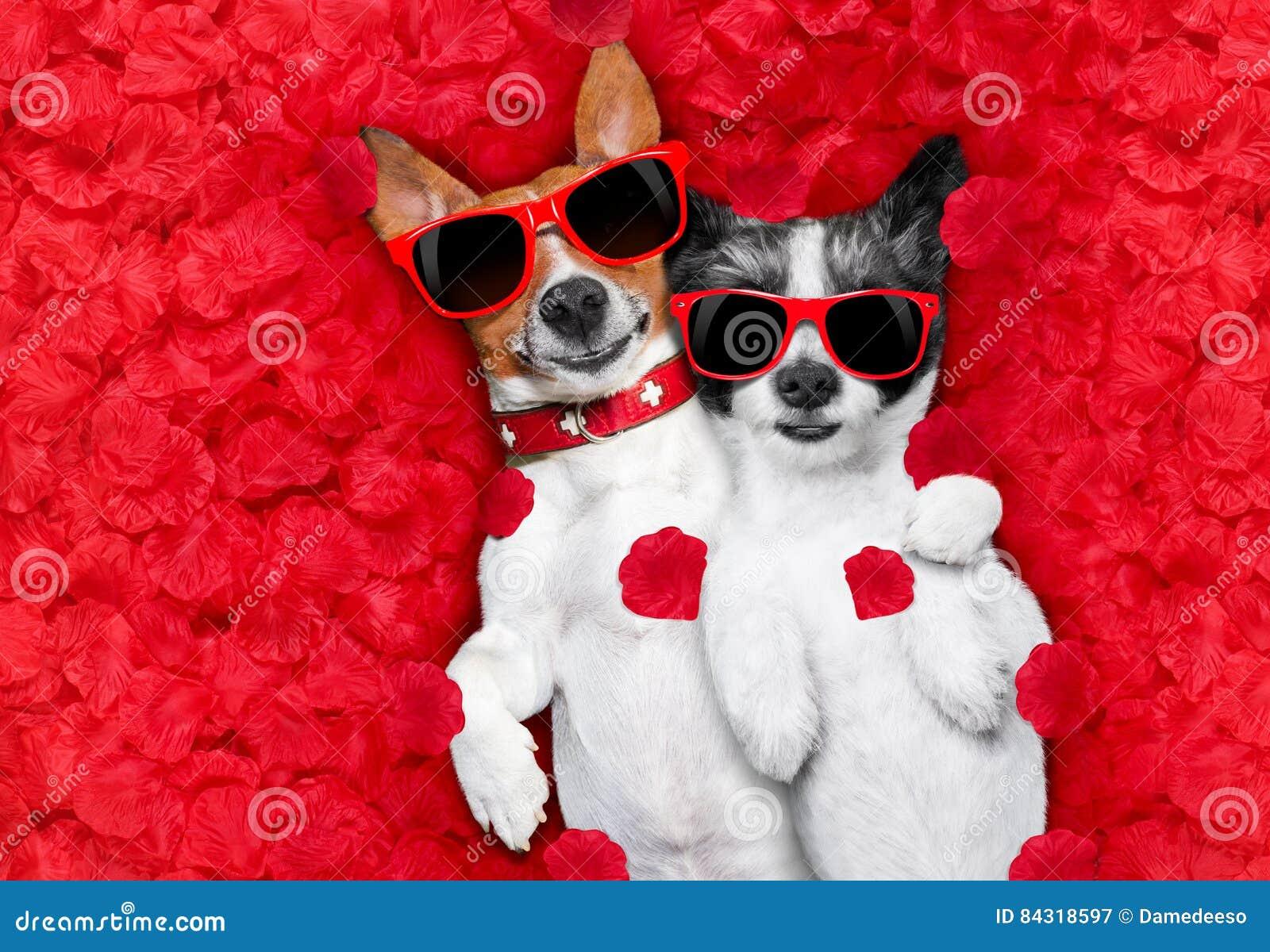 Coppie dei biglietti di S. Valentino dei cani nell amore