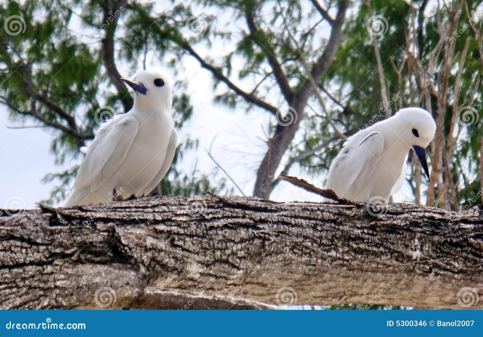 Download Coppie Dell'uccello. Tristezza, Offesa. Fotografia Stock - Immagine di rapporto, pace: 5300346