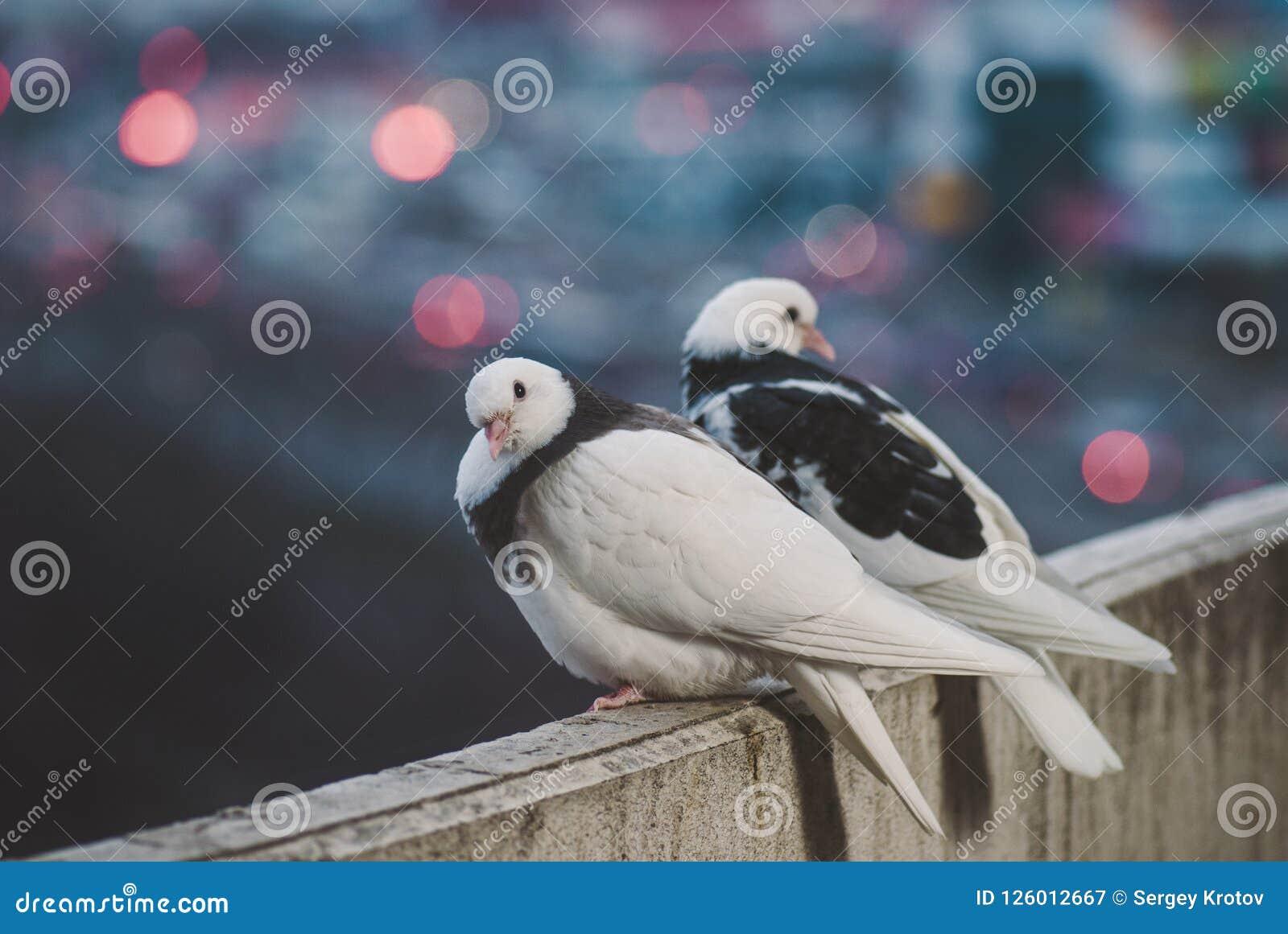 Nido Di Tortore Sul Balcone foto stock e immagini a tema colombe sul balcone - scarica