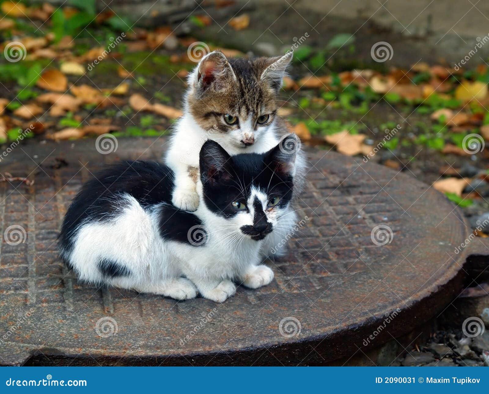 Coppie i piccoli gattini immagine stock immagine 2090031 for I gattini piccoli