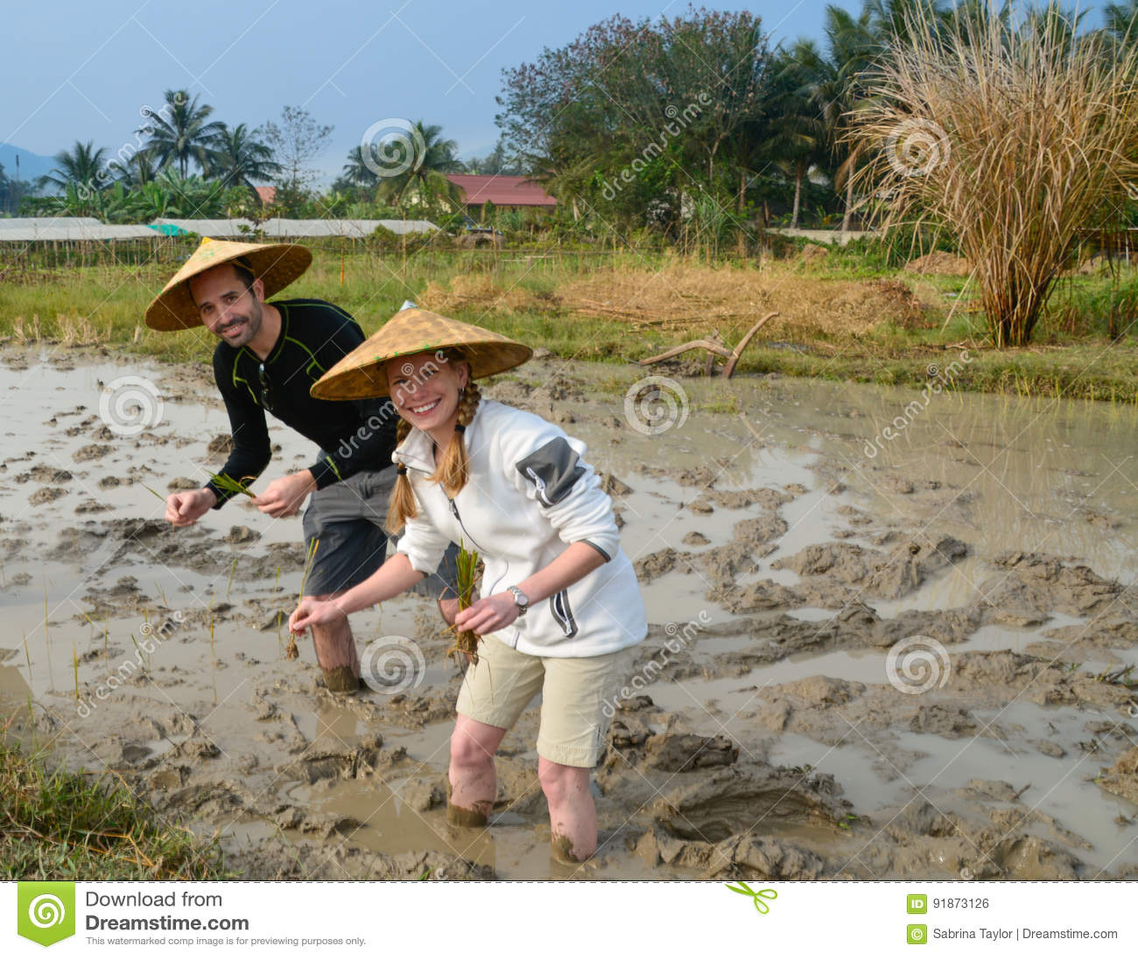 Coppie nel giacimento del riso nel Laos