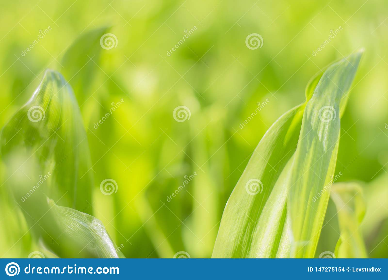Background texture green leaves grass with a blurred background
