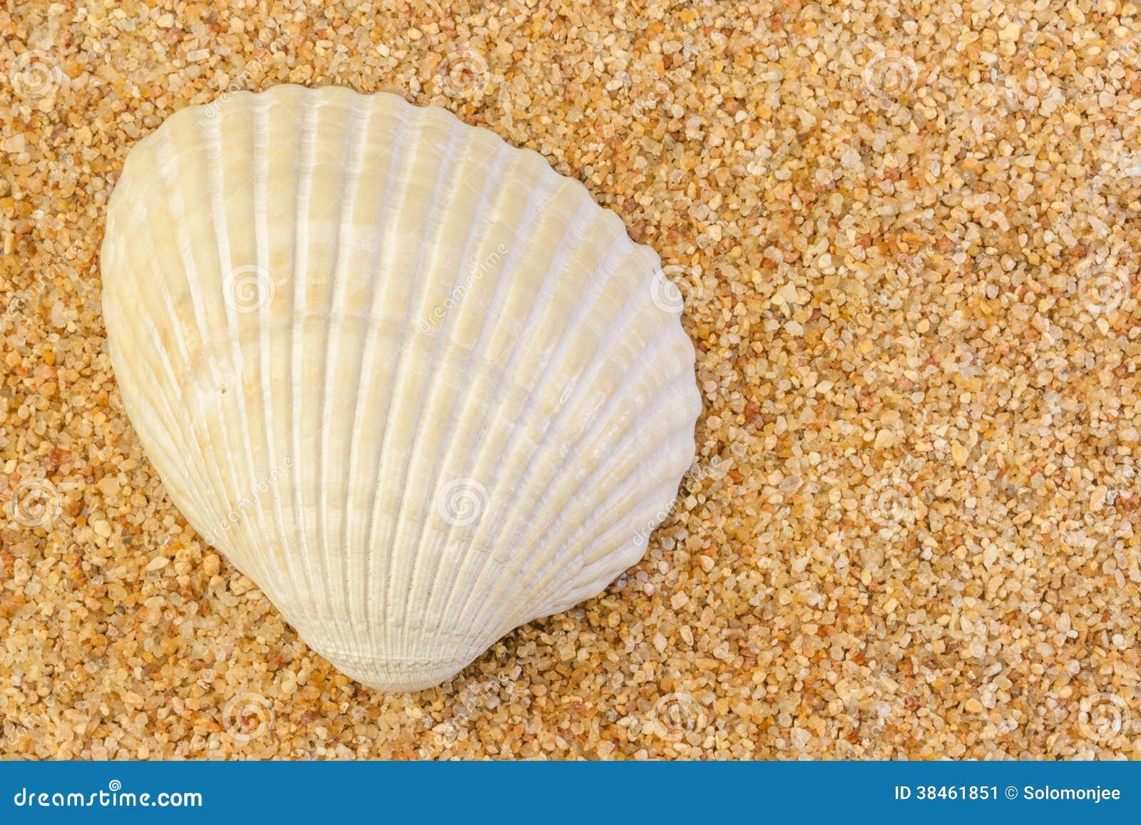 Coque Shell sur le sable brut
