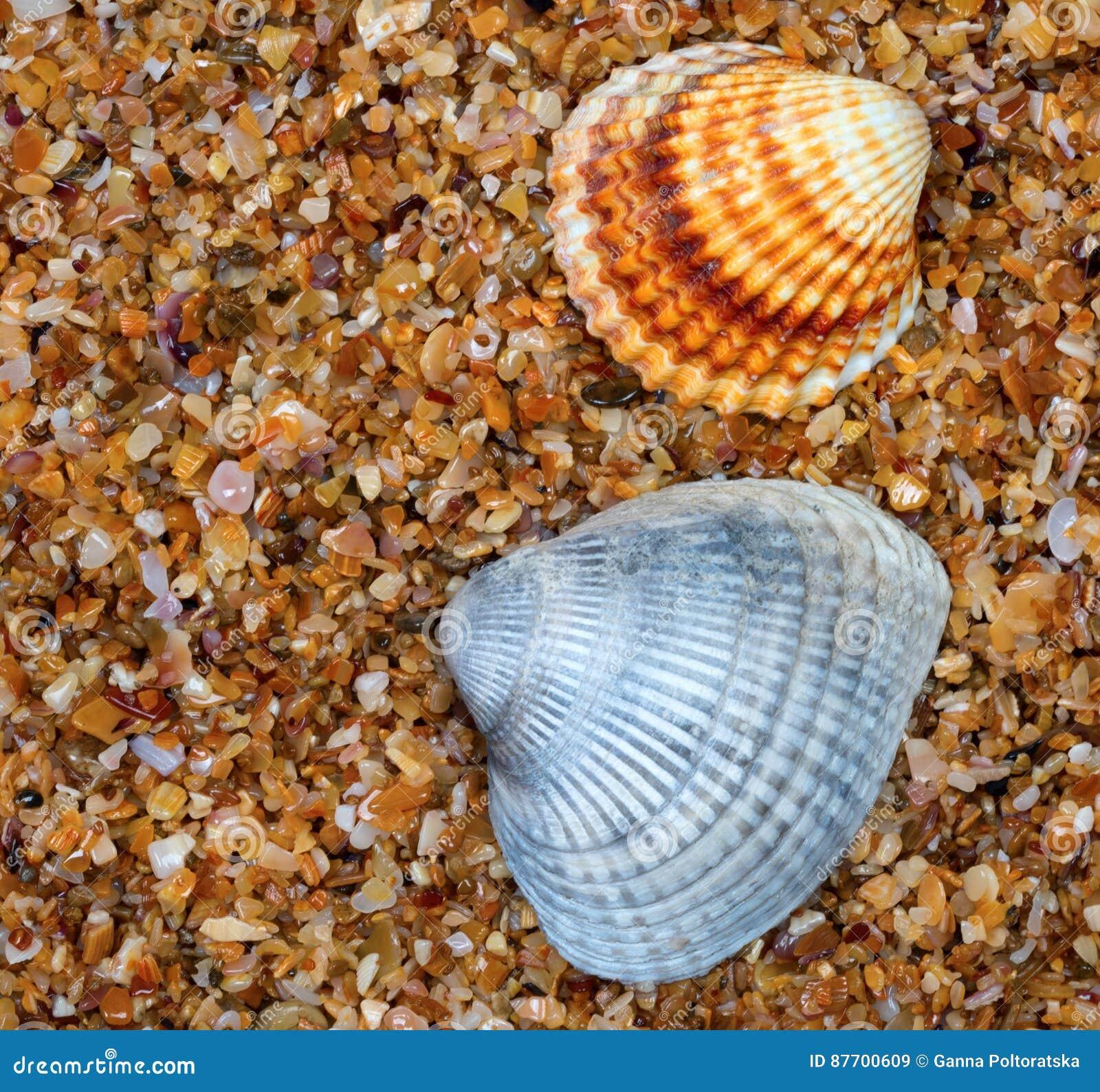 Coquillage deux sur le sable dans le jour du soleil