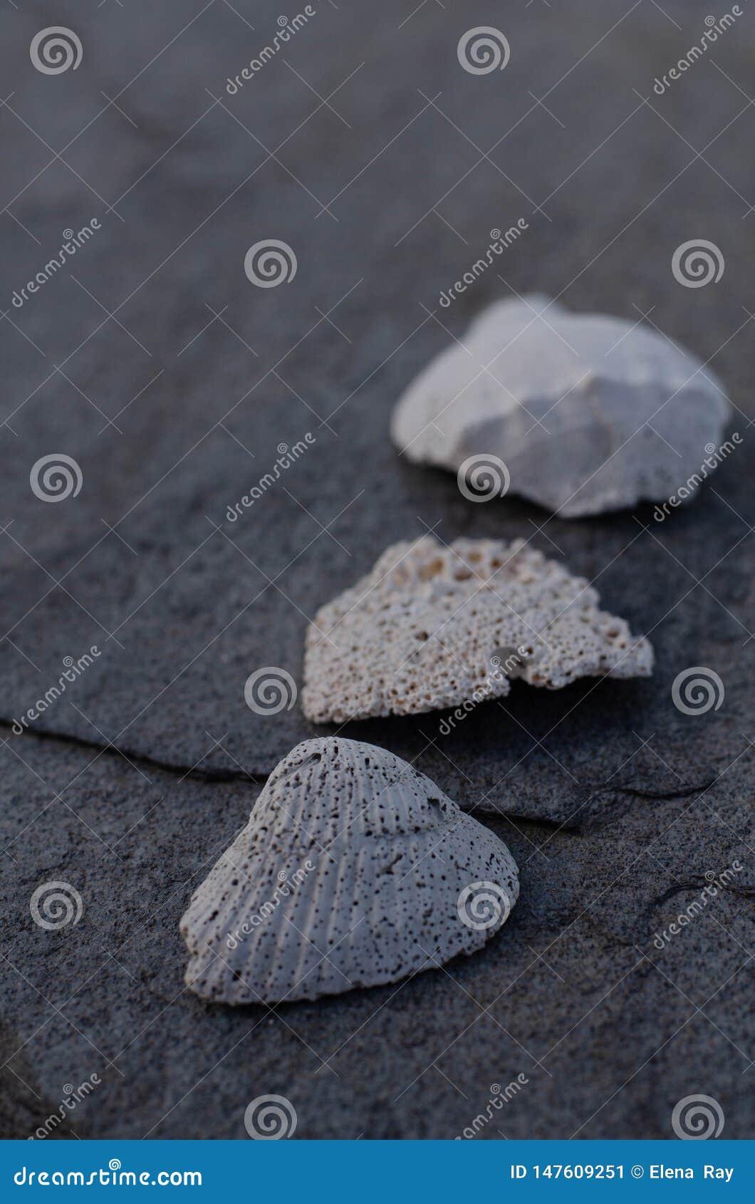 Coquillage et fragments sur Gray Stone