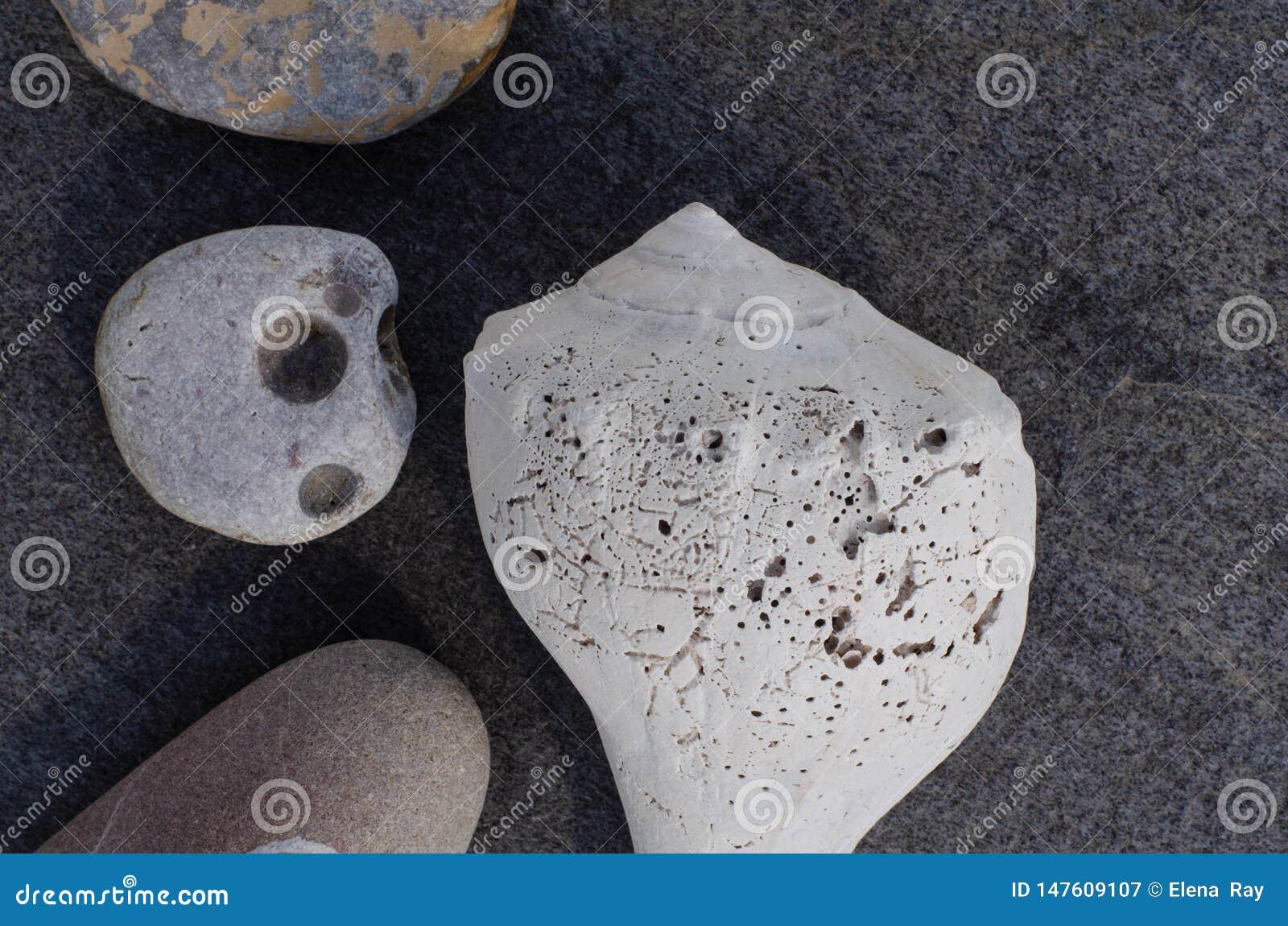 Coquillage et pierres