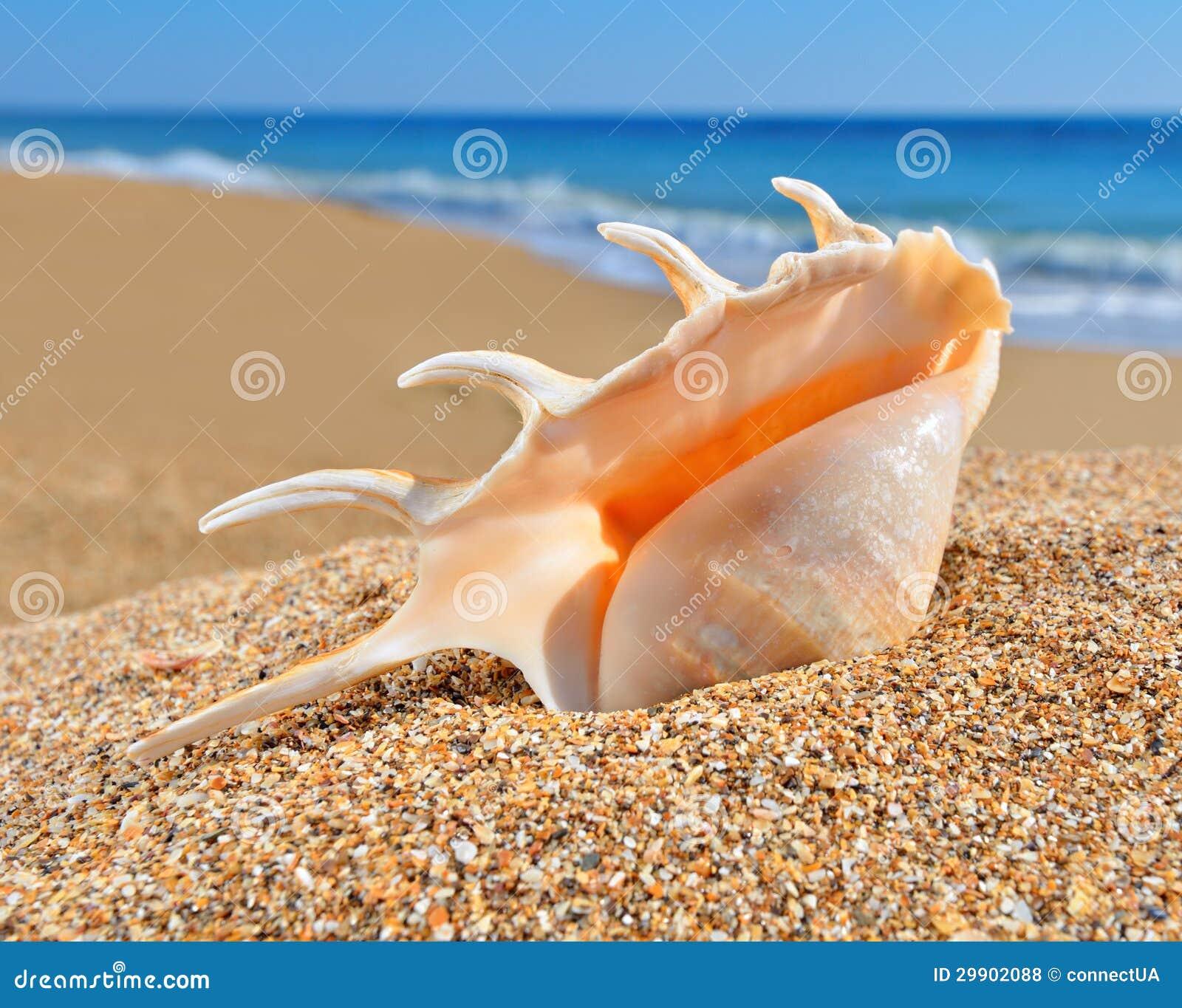 coquillage sur un sable de plage photo stock image 29902088. Black Bedroom Furniture Sets. Home Design Ideas