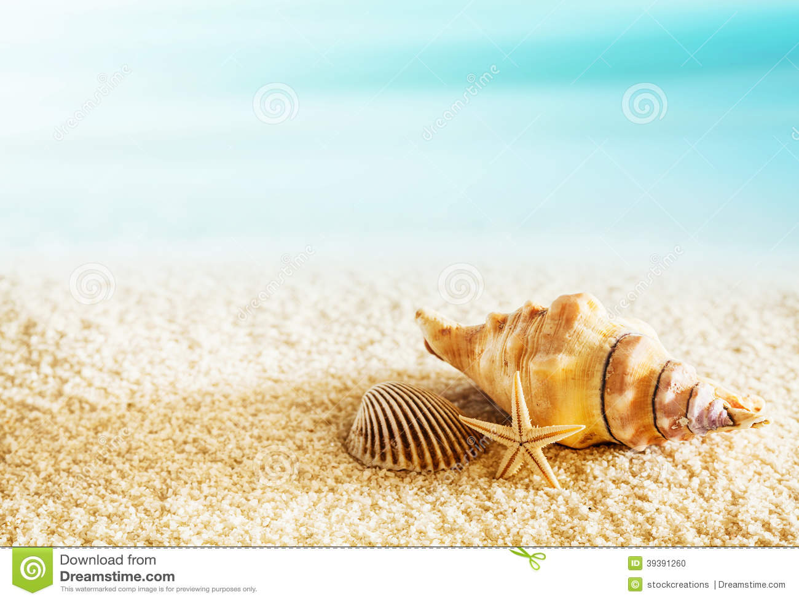 coquillages sur un bord de la mer tropical photo stock image du c te moule 39391260. Black Bedroom Furniture Sets. Home Design Ideas
