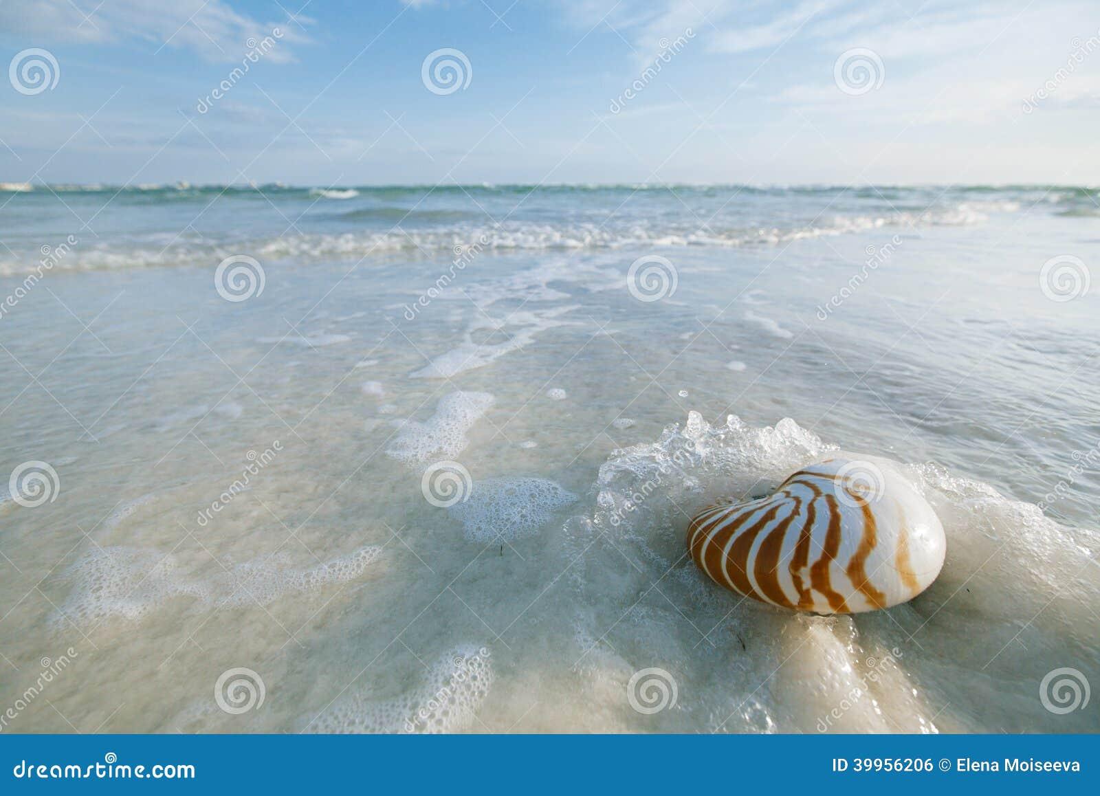 Coquille de Nautilus avec la vague de mer, plage de la Floride sous le ligh du soleil