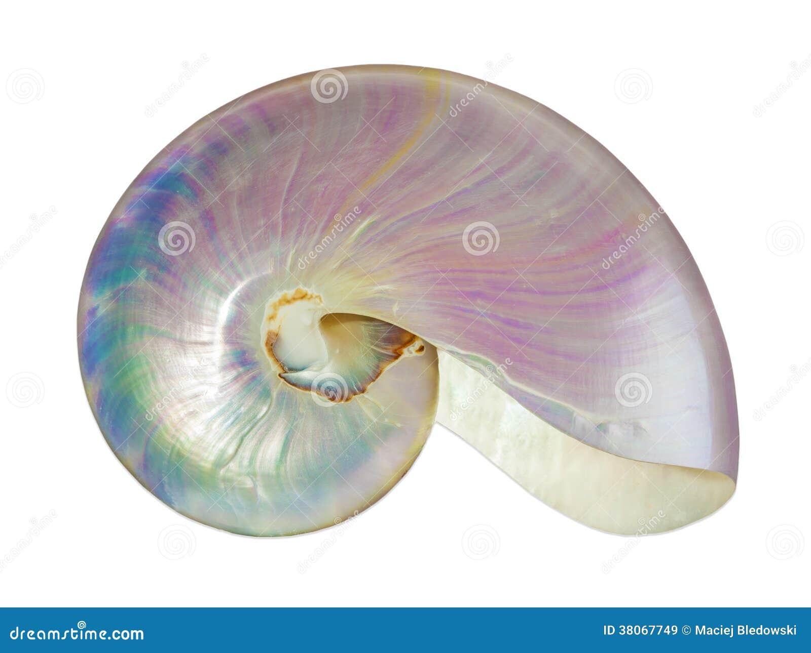 Coquille de perle d un nautilus.