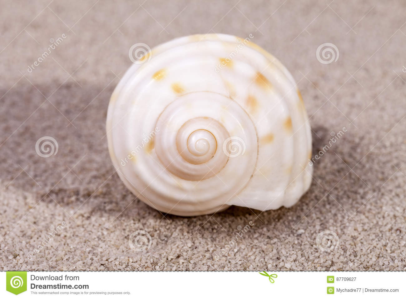 Coquille simple de mer d escargot marin se trouvant sur le sable