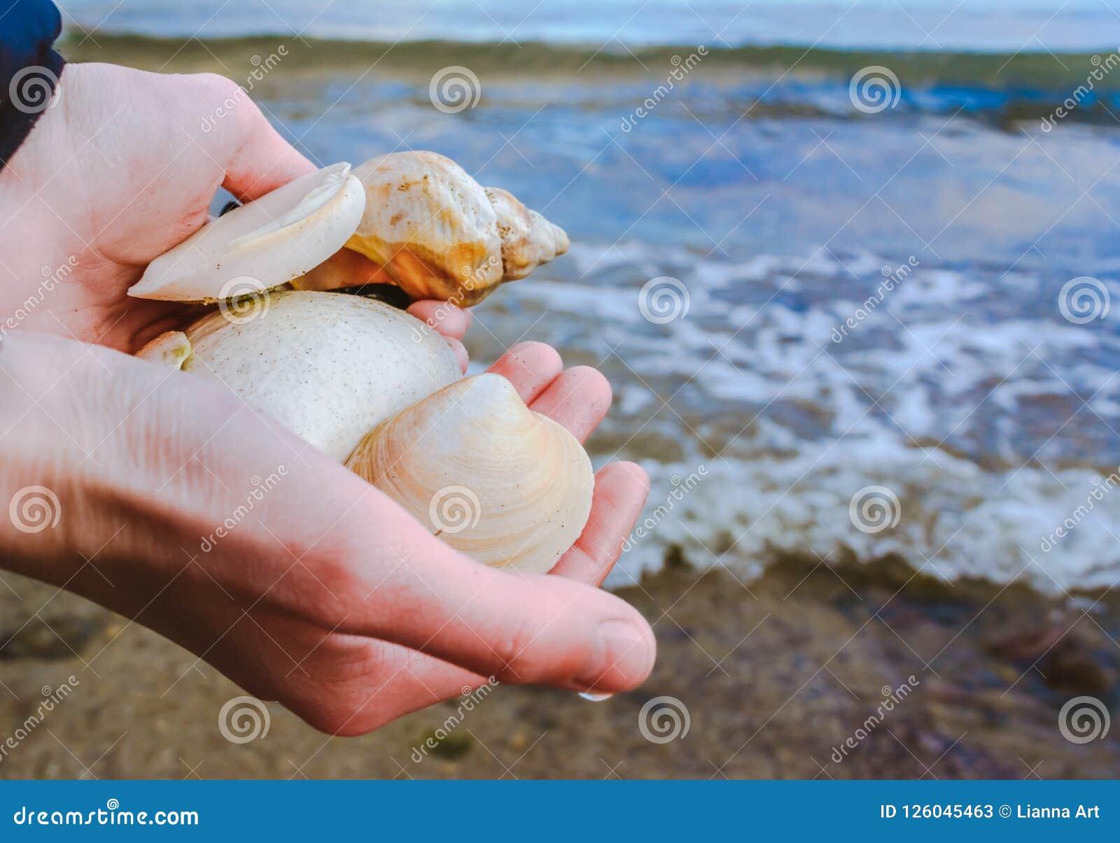 Coquilles dans des mains à la personne dans la perspective de la mer