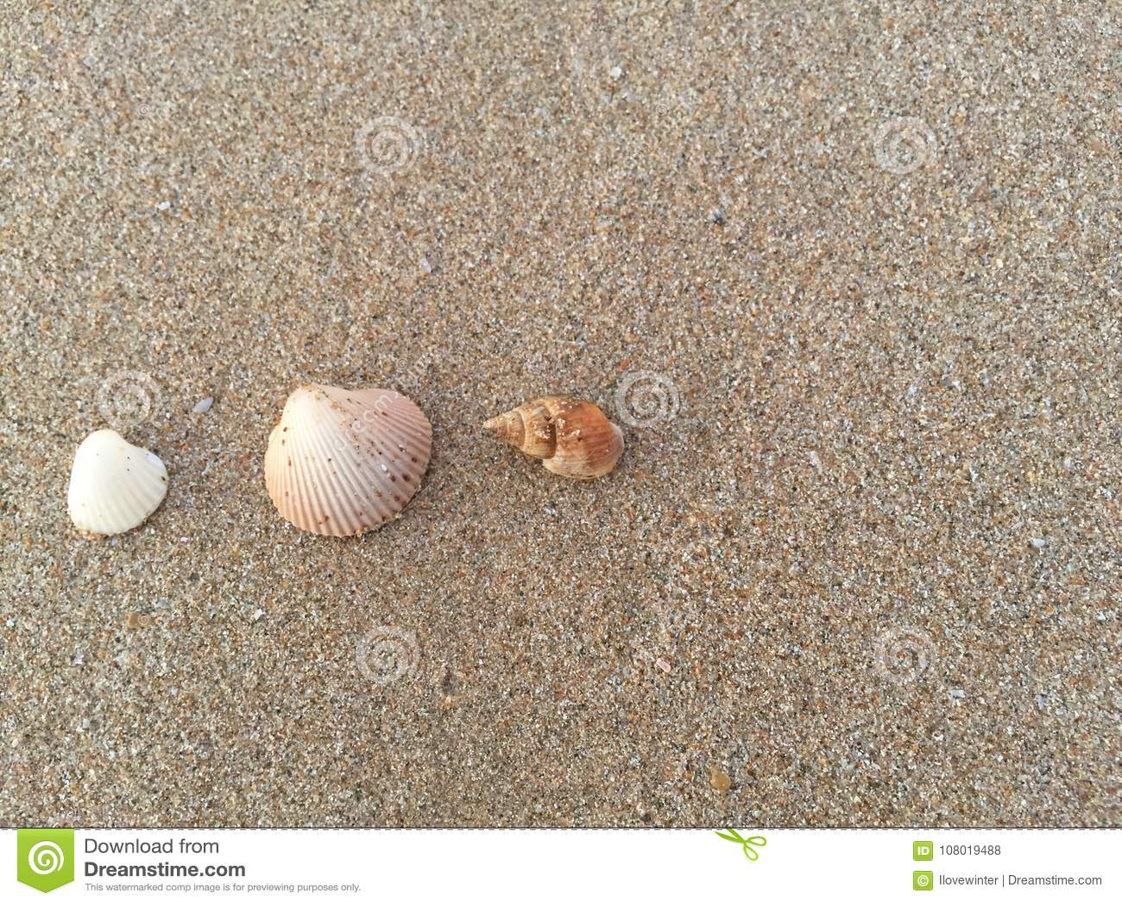 Coquilles de mer sur le sable brun Seashell de feston sur le rose