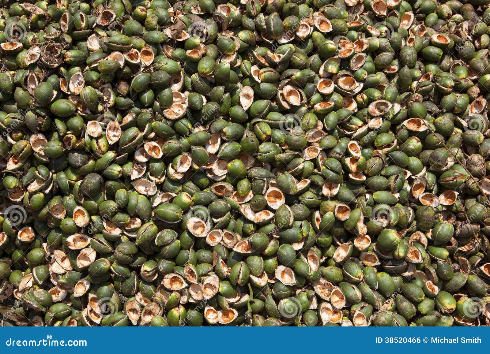 coquilles de noix de palme photo stock image du production 38520466. Black Bedroom Furniture Sets. Home Design Ideas