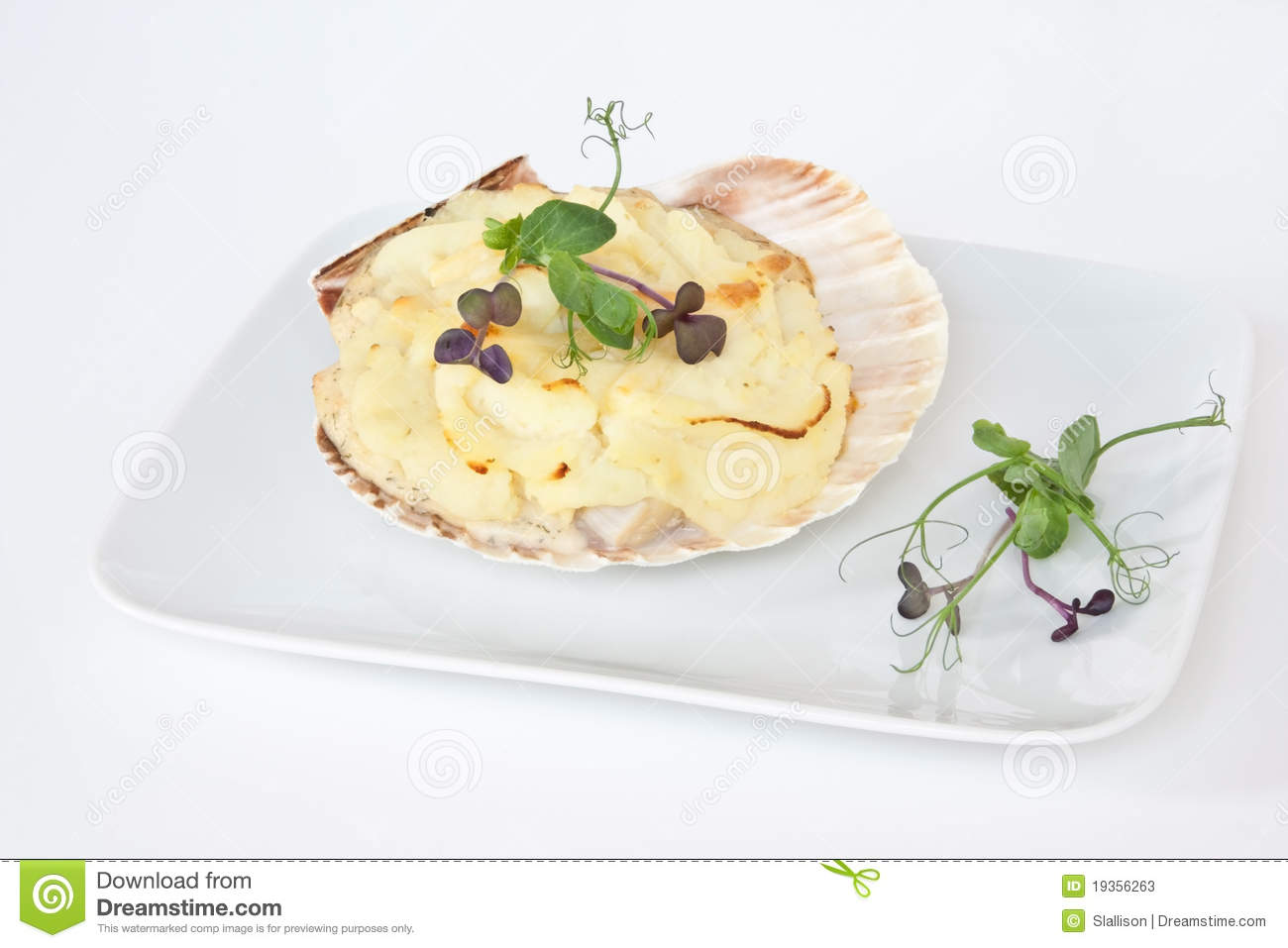 Coquilles Heilige Jacques
