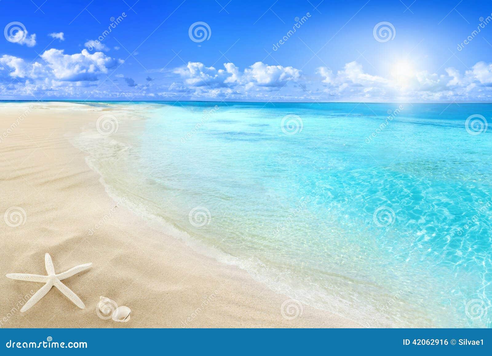 Coquilles sur la plage ensoleillée