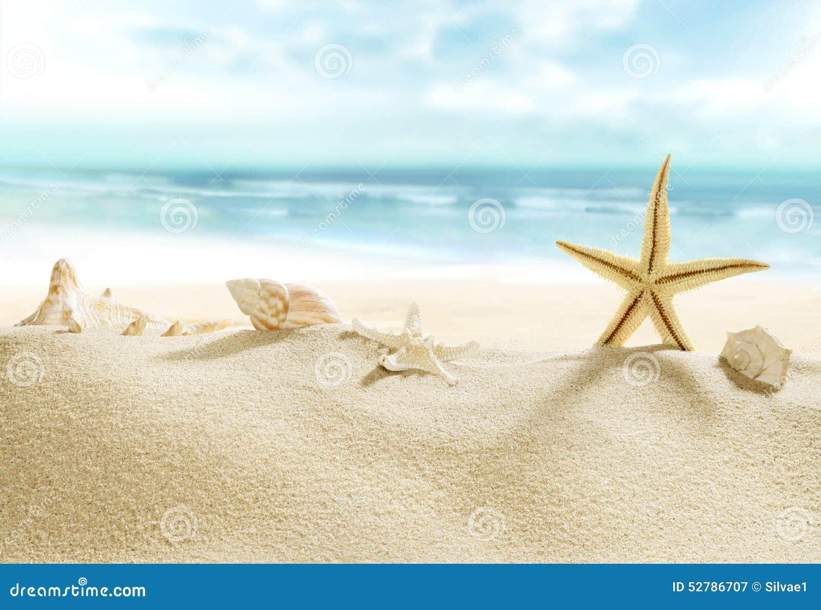 Coquilles sur la plage tropicale