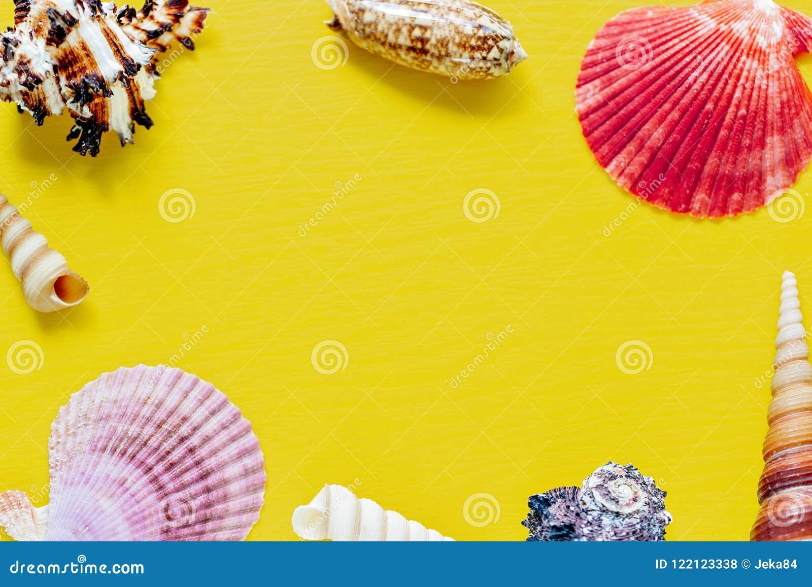 Coquilles sur le jaune lumineux Beau fond d été Configuration plate Texture des coquilles
