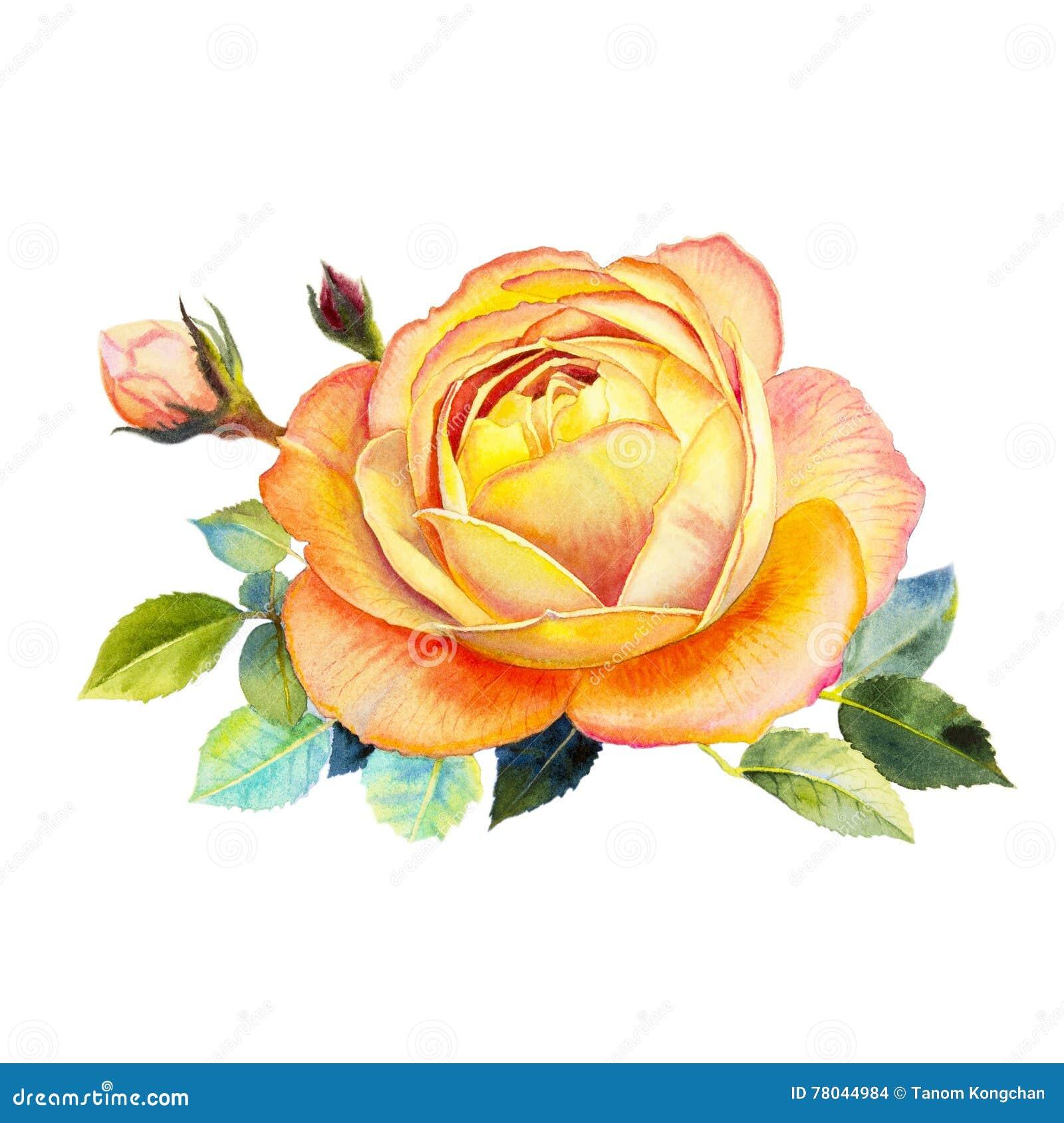 A cor alaranjada da ilustração da flor da aquarela da arte da pintura de aumentou