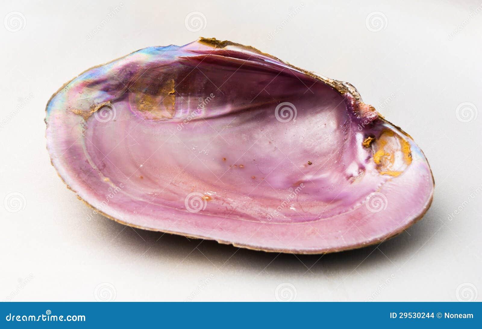 Cor cor-de-rosa do olmo (mar Shell de Pao Hua)