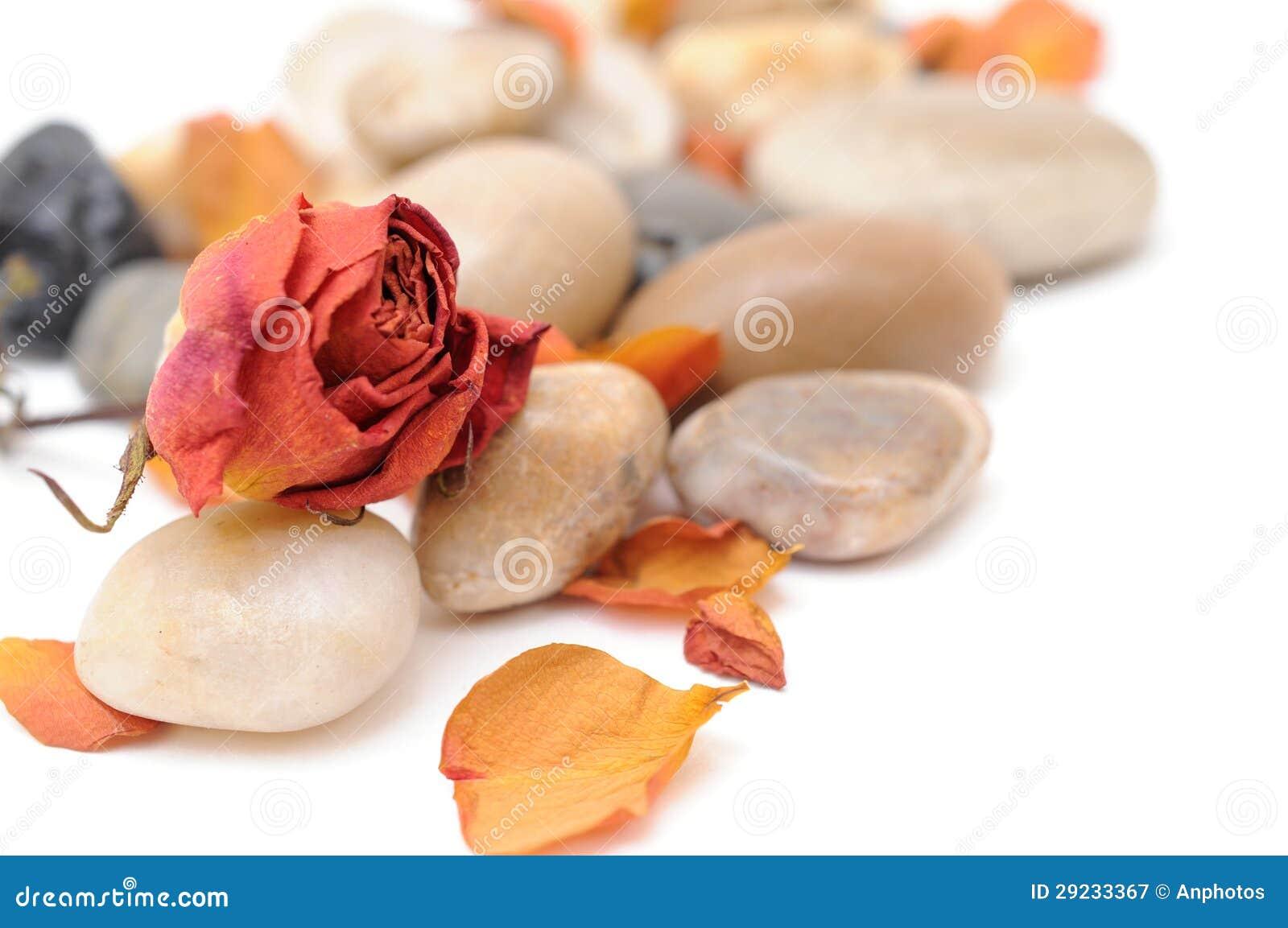Download Cor-de-rosa E De Pedra Secados Imagem de Stock - Imagem de floria, pedra: 29233367