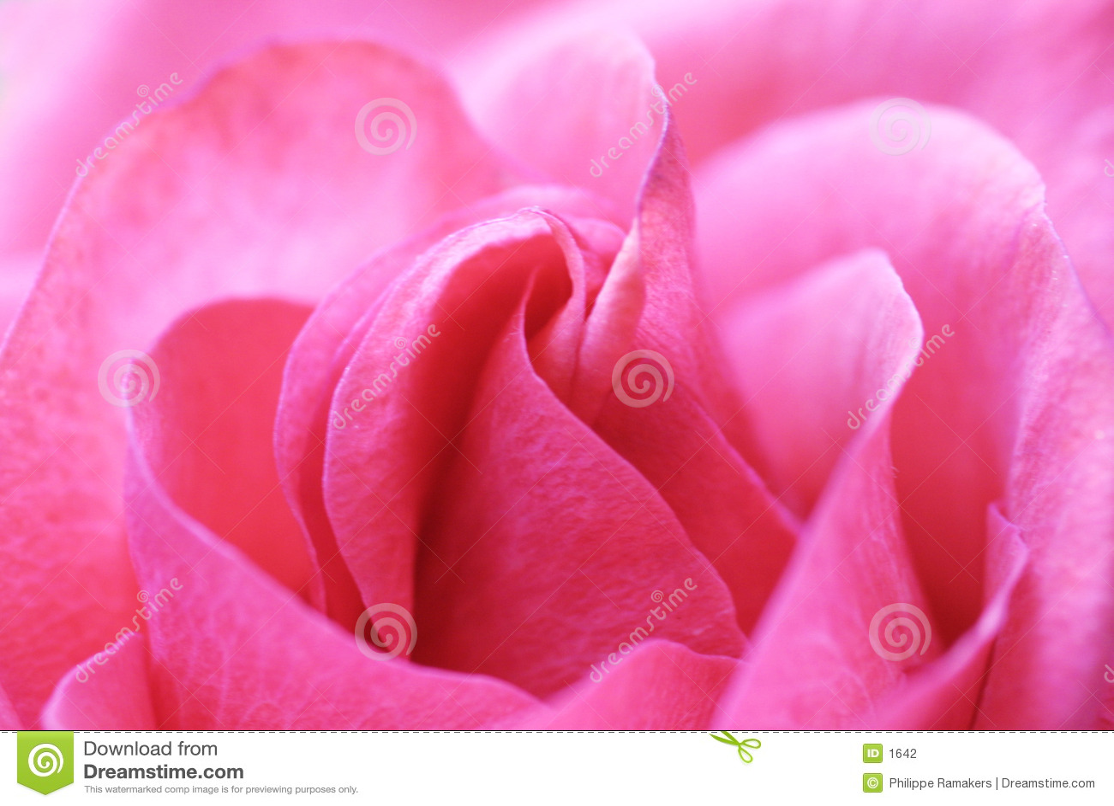 A cor-de-rosa levantou-se