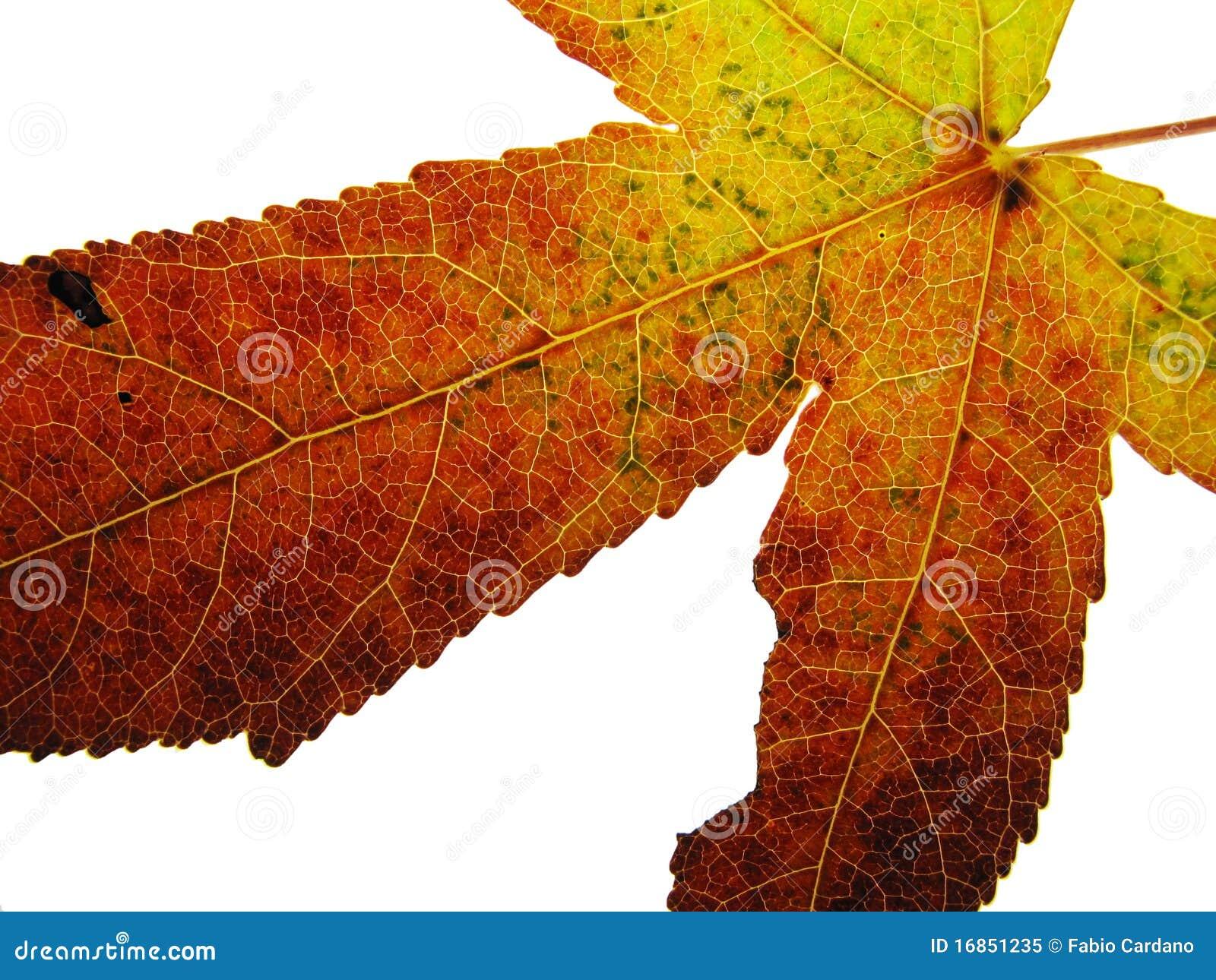 Cor do outono