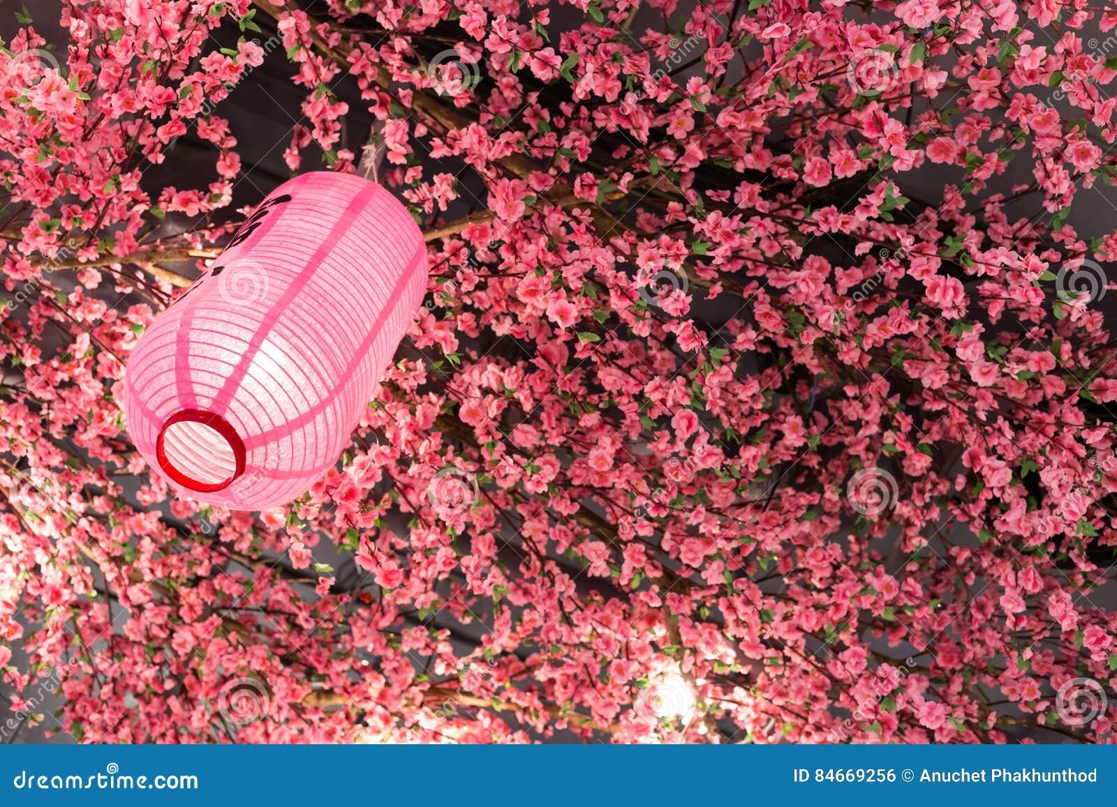 Cor do rosa da lanterna japonesa com sakura plástico