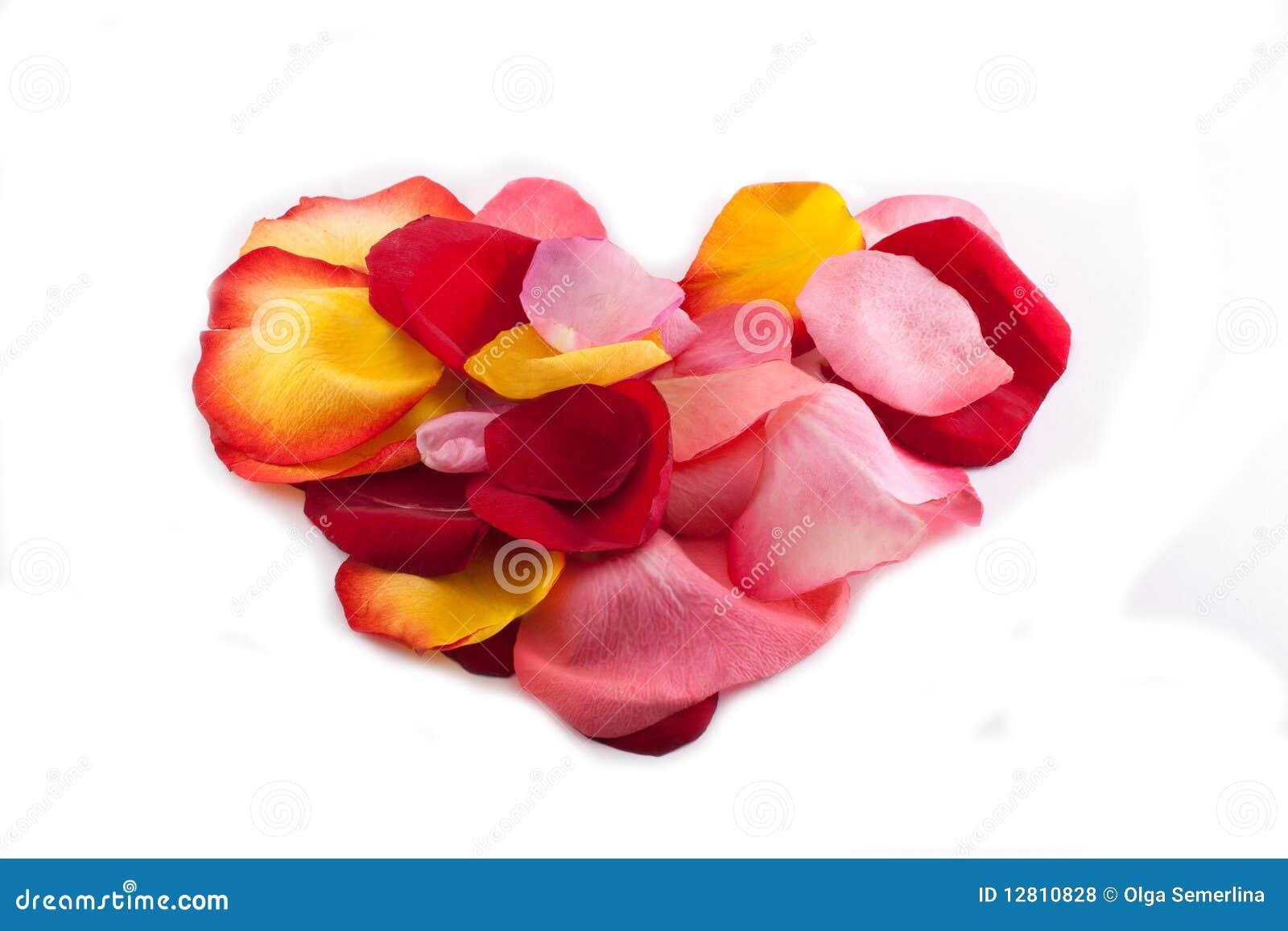 Coração das pétalas cor-de-rosa