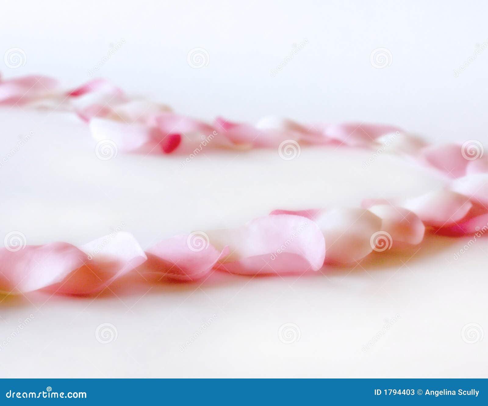 Coração das pétalas de Rosa