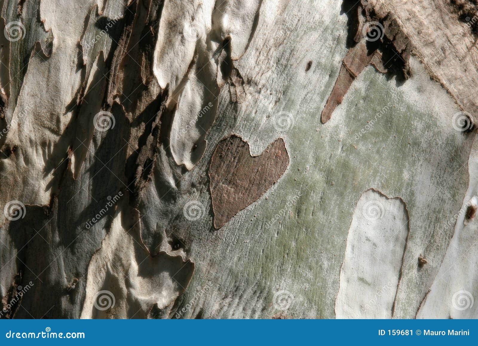 Coração na madeira