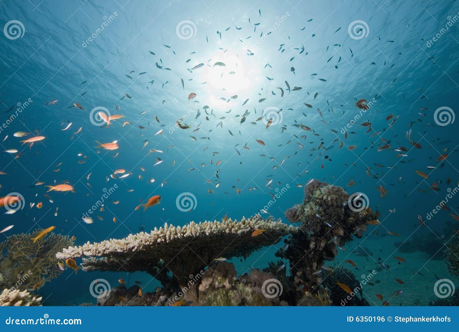 corail et poissons photo stock image du poissons blanc 6350196. Black Bedroom Furniture Sets. Home Design Ideas
