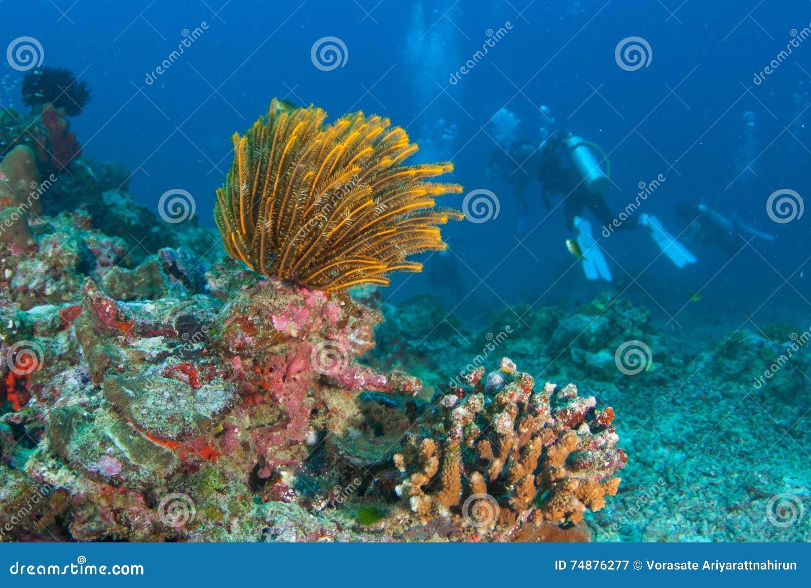 Corais macios coloridos em Andaman norte, Tailândia do sul