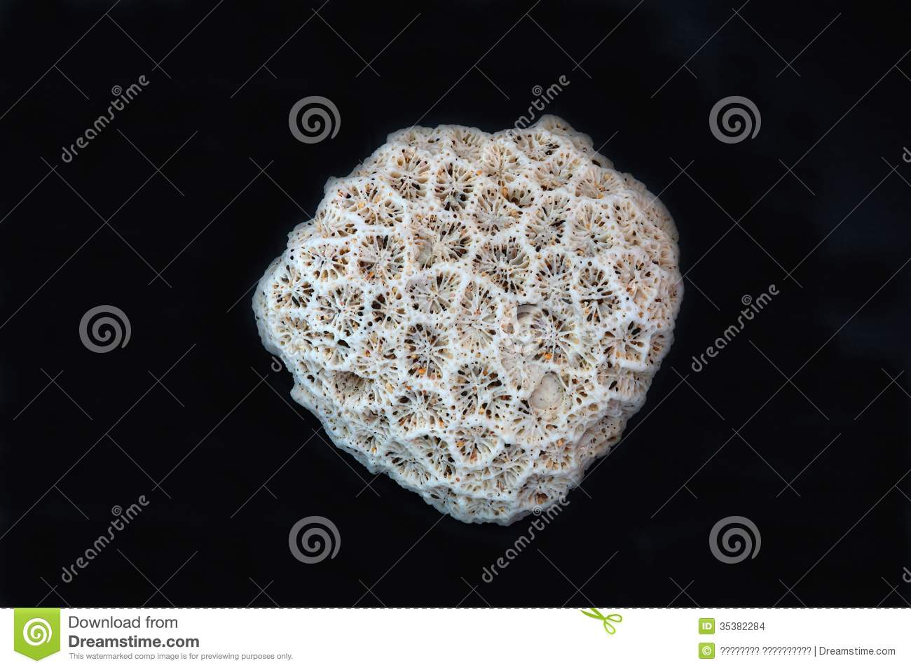 Coral On A Black Background Stock Images Image 35382284
