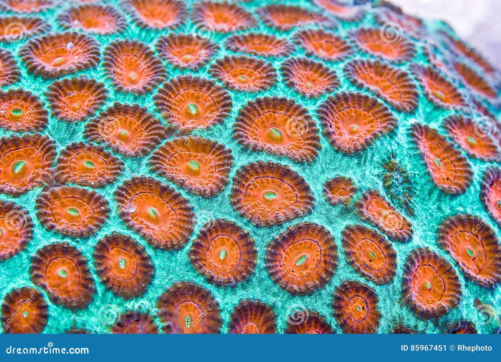 Coral duro imagen de archivo. Imagen de primers, agua - 85967451