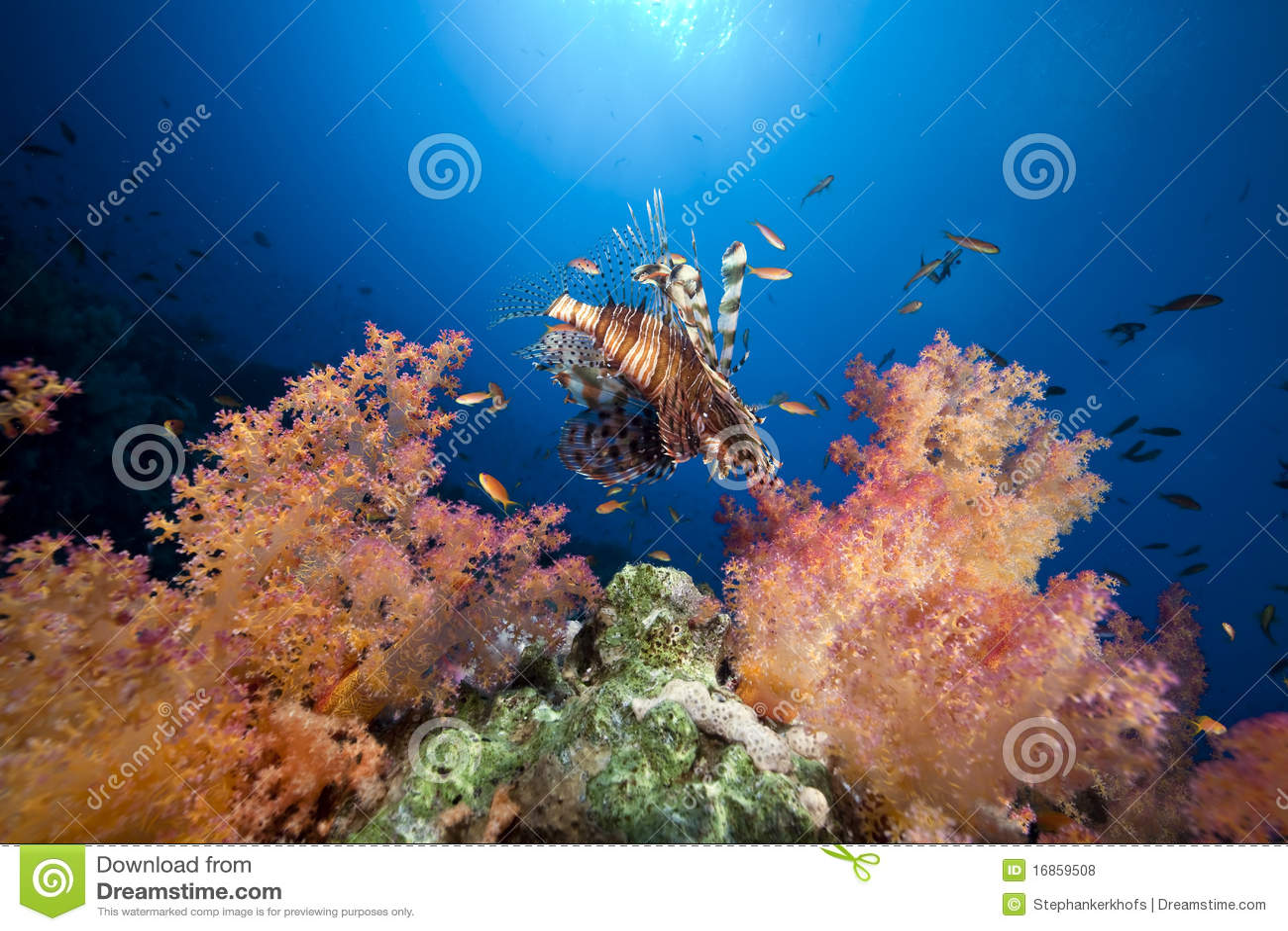 Coral e peixes no Mar Vermelho.
