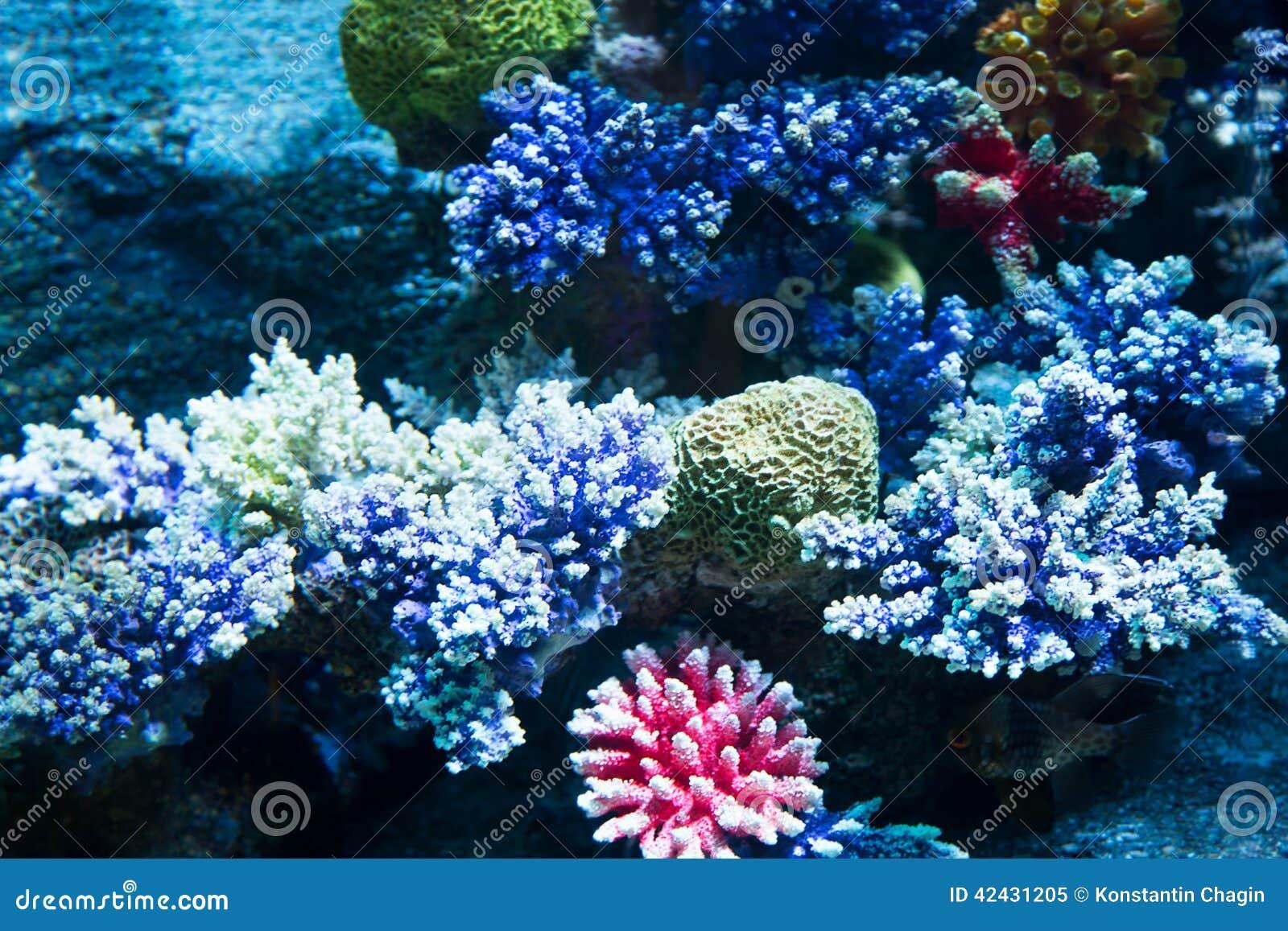 Coral en el fondo marino