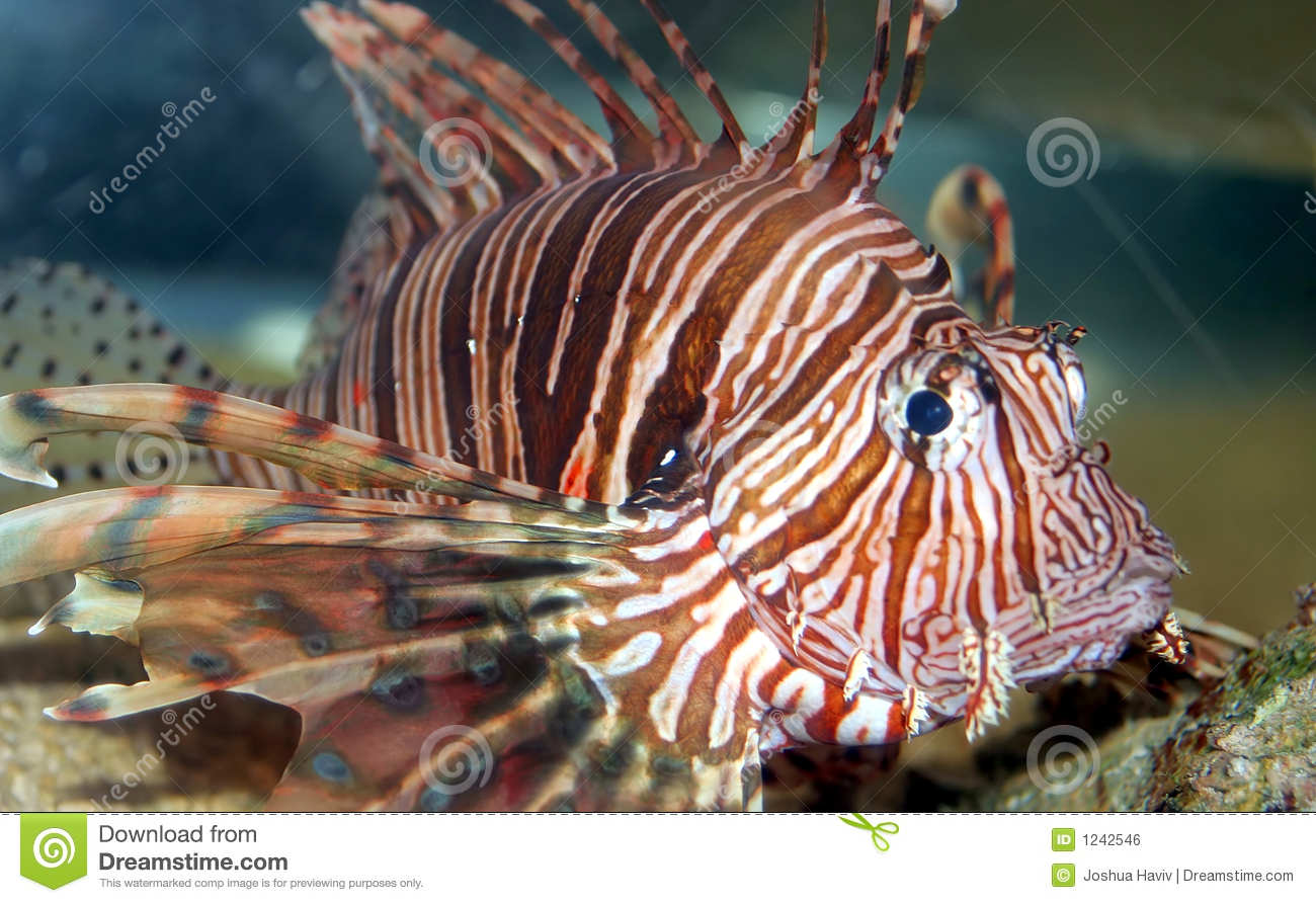 A coral fish in the red sea royalty free stock image for Red sea fish