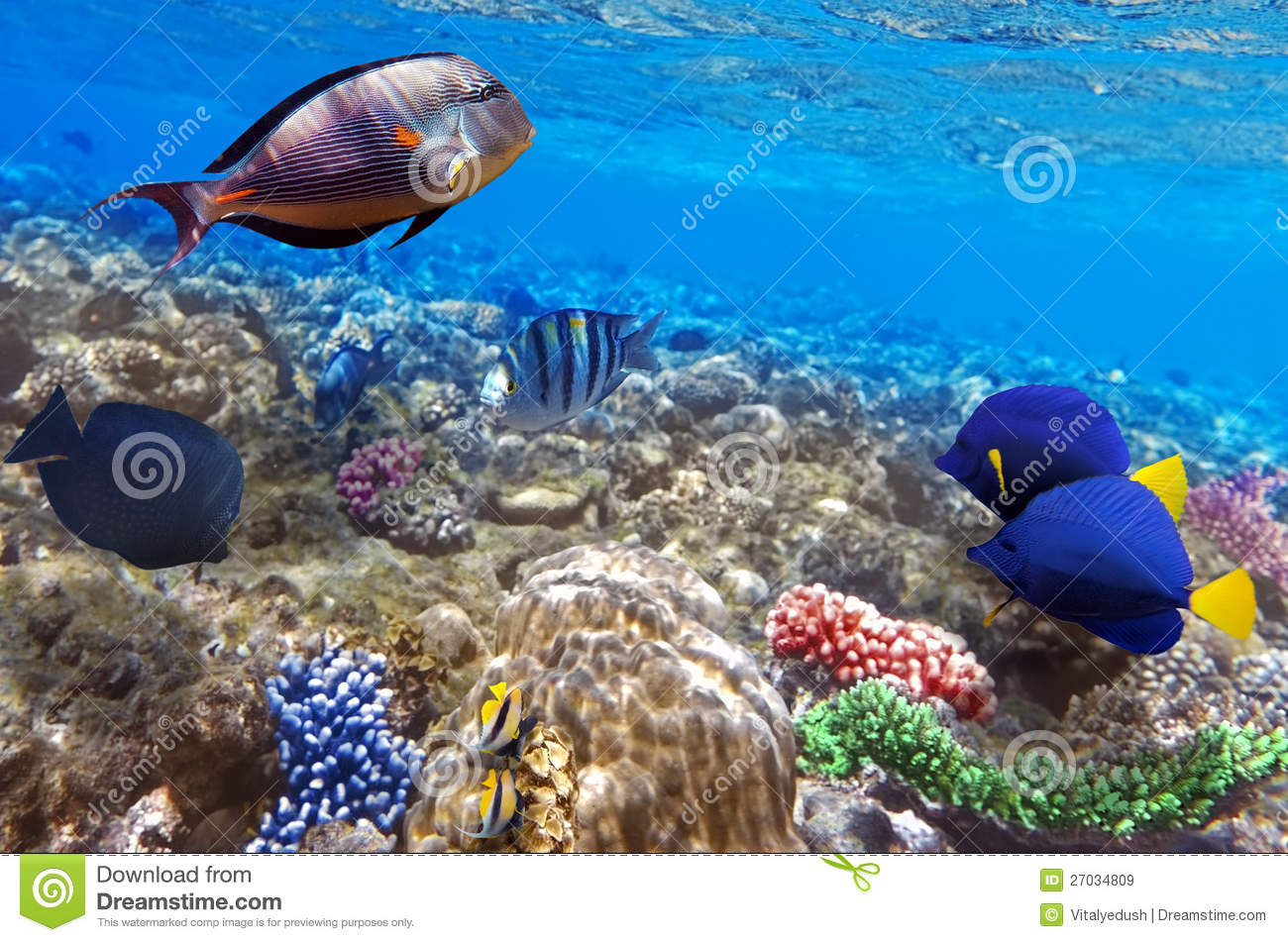 Coral and fish in the red sea egypt stock image image for Red sea fish