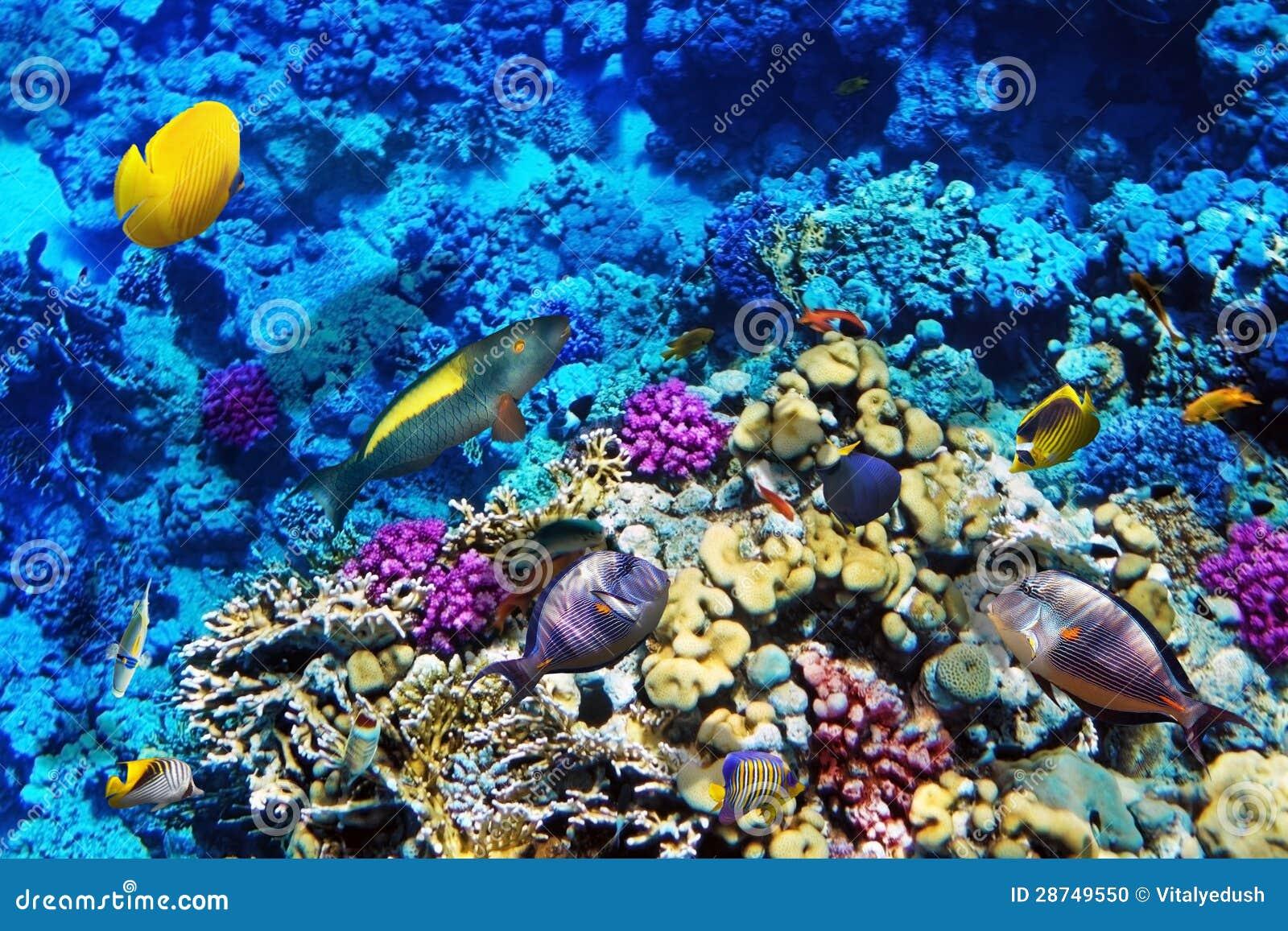 South Bay Aquarium
