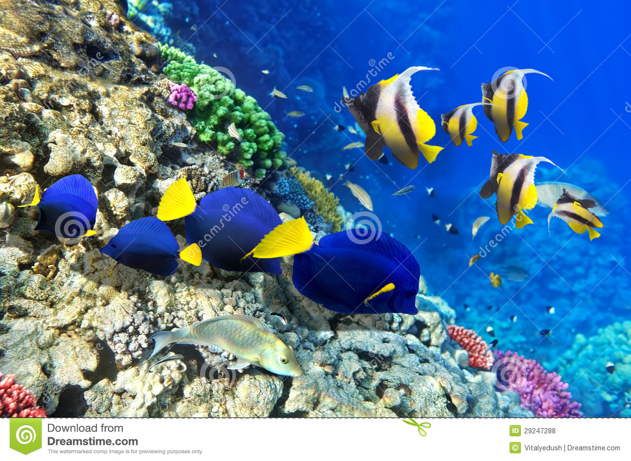 Coral and fish in the red sea egypt africa stock photo for Red sea fish