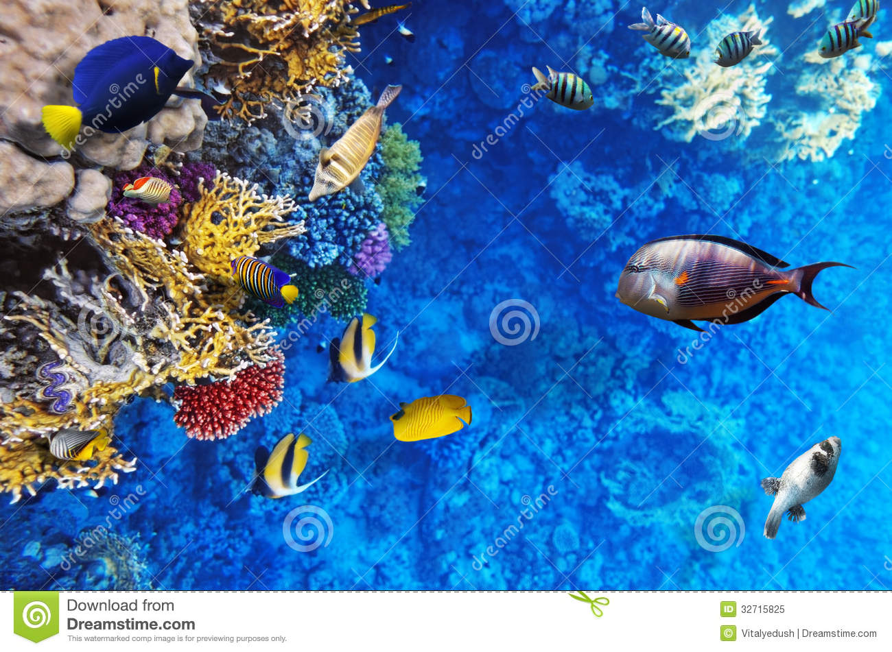 Coral and fish in the red sea egypt africa royalty free for Red sea fish