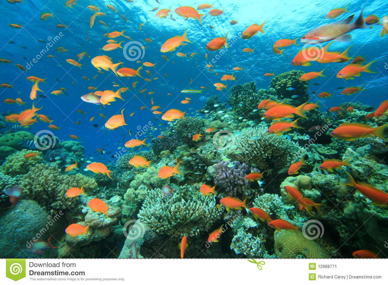 Coral Garden Stock Image Image 12968771