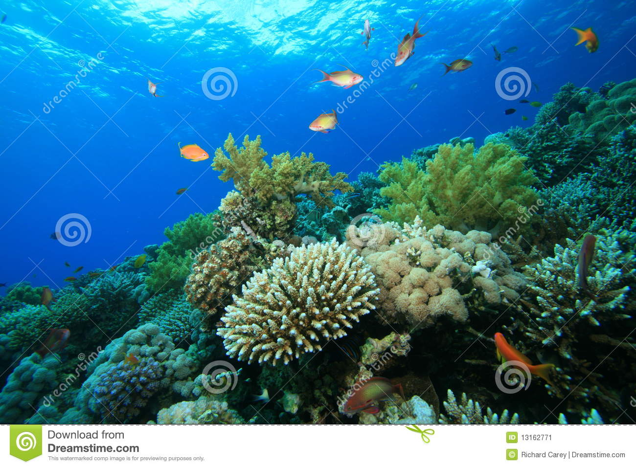 Coral Garden Stock Image Image 13162771