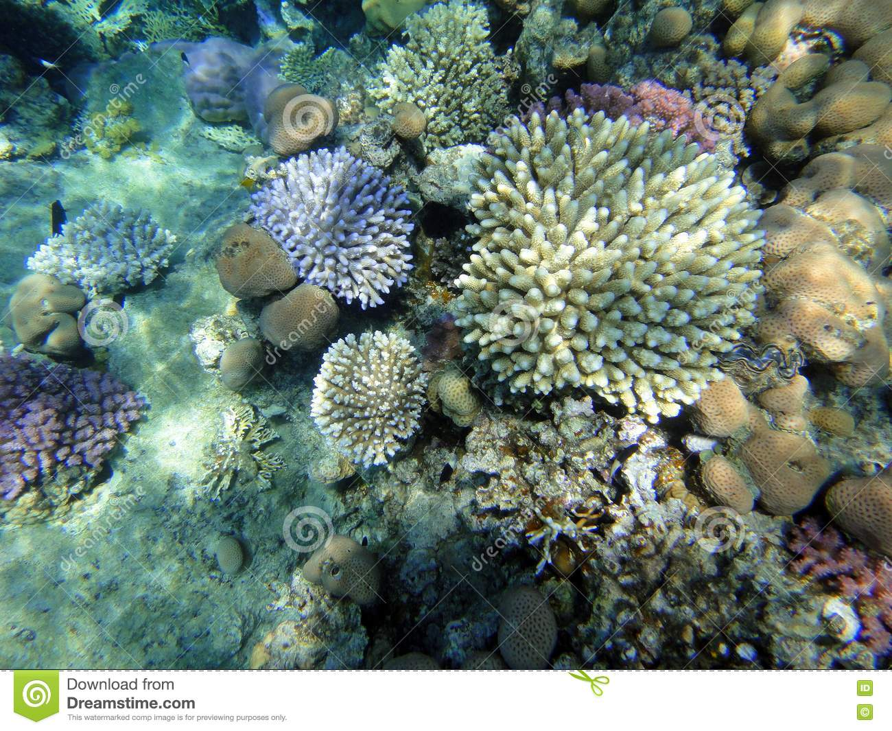 Coral Garden Stock Images Image 17874484