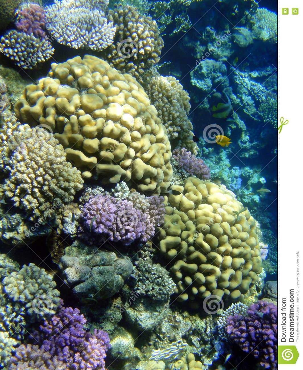 Coral Garden Stock Image Image 20444411