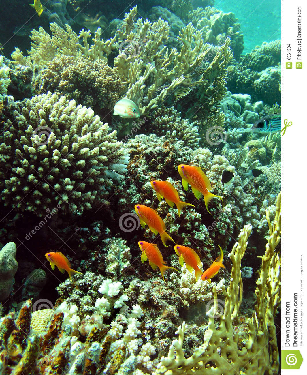 Coral Garden Stock Images Image 6961234